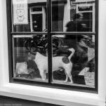 honden (8 van 8)