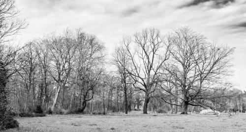 trees-20